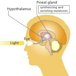 pineal-gland-and-eye
